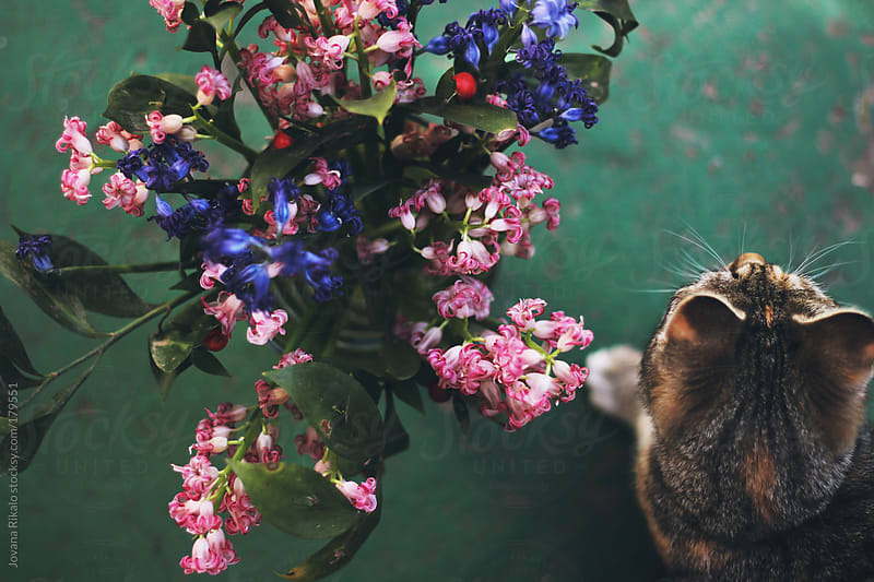 Cat and flowers by Jovana Rikalo for Stocksy United