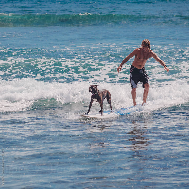 Surfer With His Surfing Dog Ridding a Small Wave by Shelly Perry for Stocksy United