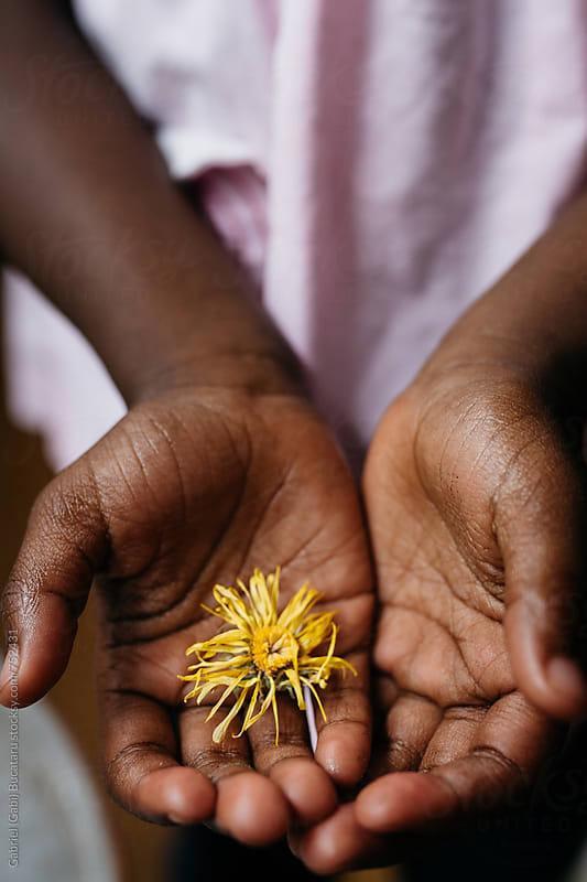 Black girl's hands holding a dried marigold flower by Gabriel (Gabi) Bucataru for Stocksy United