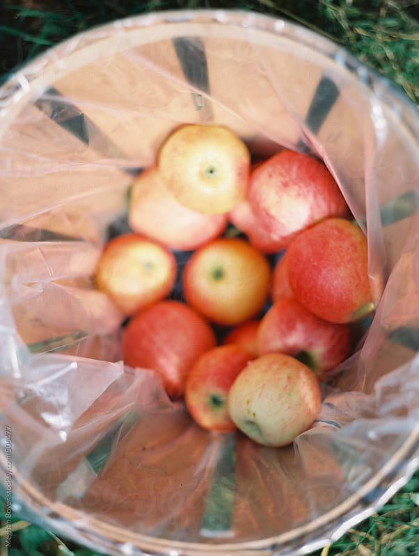 apples for sale by Meghan Boyer for Stocksy United