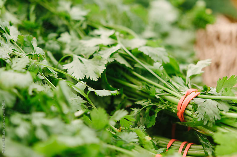 bunches of cilantro herbs for sale by Deirdre Malfatto for Stocksy United