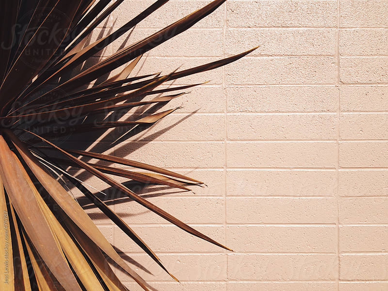 brown palm leaves against beige building by Jess Lewis for Stocksy United