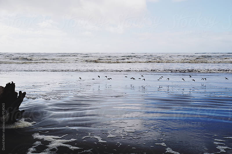 Birds at the Beach by David Keller for Stocksy United