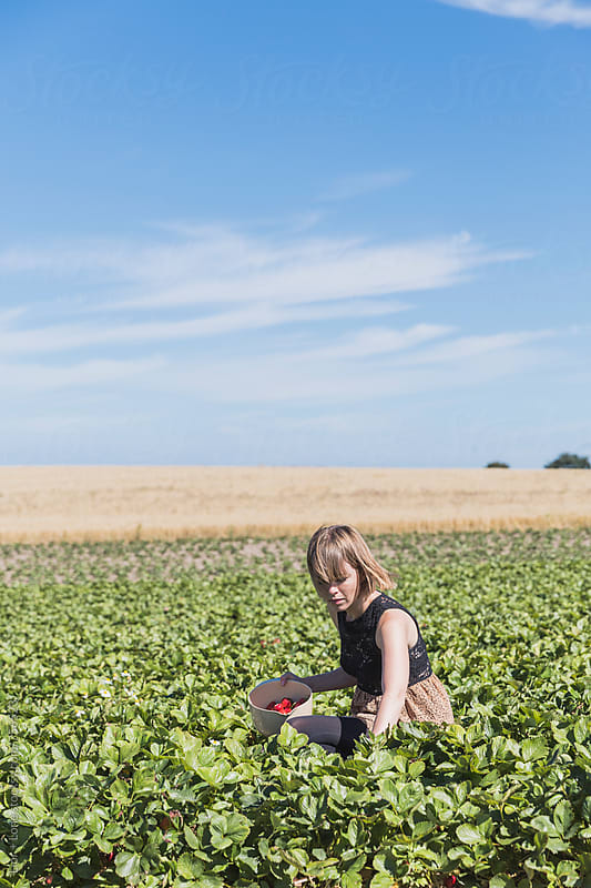 Woman crouching in field picking strawberries by Lior + Lone for Stocksy United