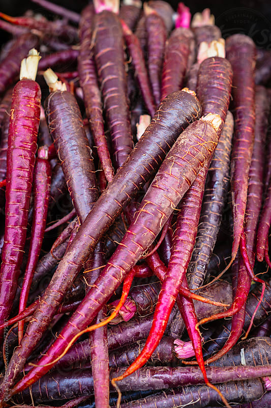 purple heirloom organic carrots by Gillian Vann for Stocksy United