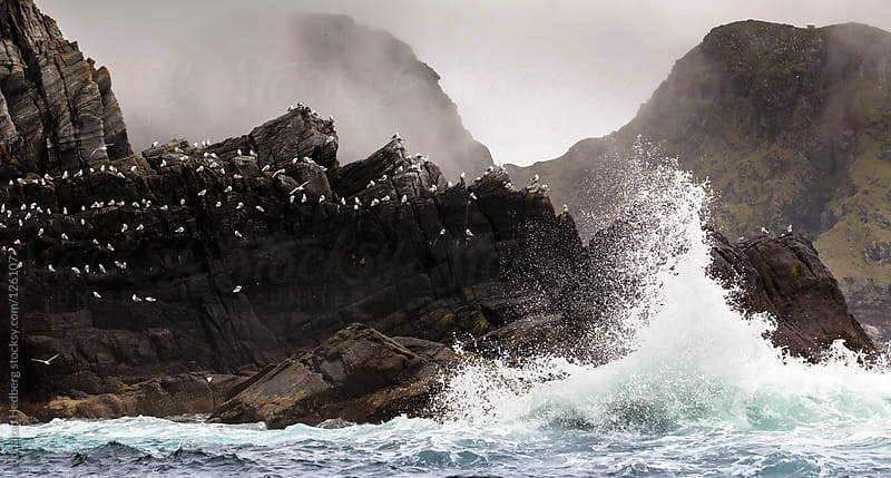 A colony of Black-legged Kittiwakes on a cliff with waves breaking by Jonatan Hedberg for Stocksy United