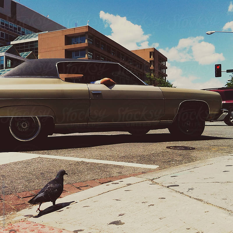 Car driving through city with pigeon by Greg Schmigel for Stocksy United