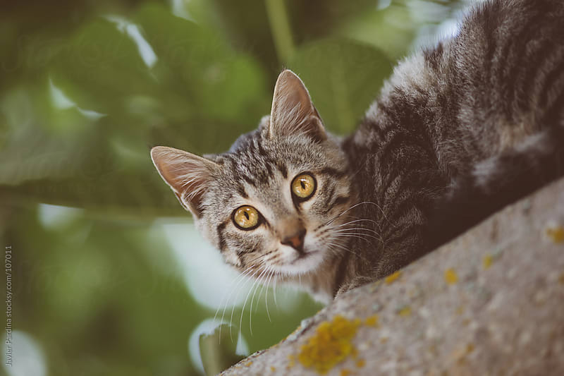 a cat  with beauty eyes on the tree by Javier Pardina for Stocksy United