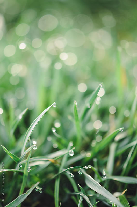 Dewdrops on Grass by Julie Rideout for Stocksy United
