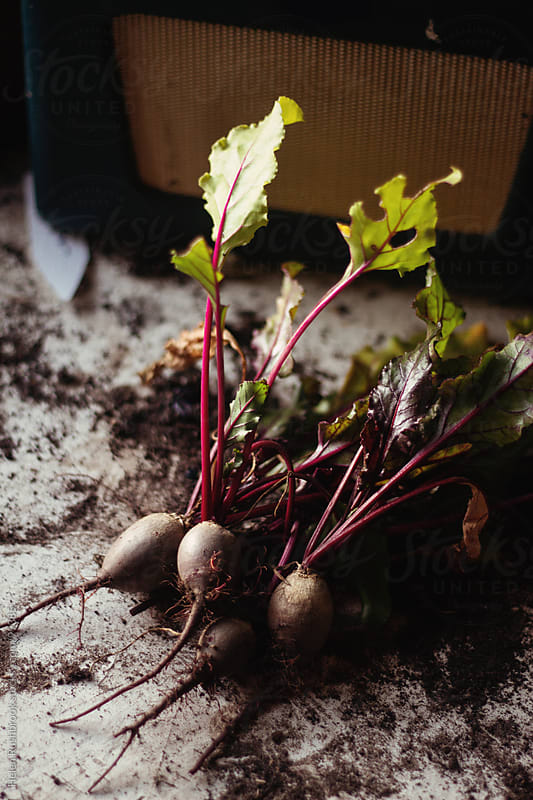 Beetroot by Helen Rushbrook for Stocksy United