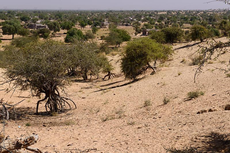 Sand dunes at Thar desert, India by Gabriel Diaz for Stocksy United