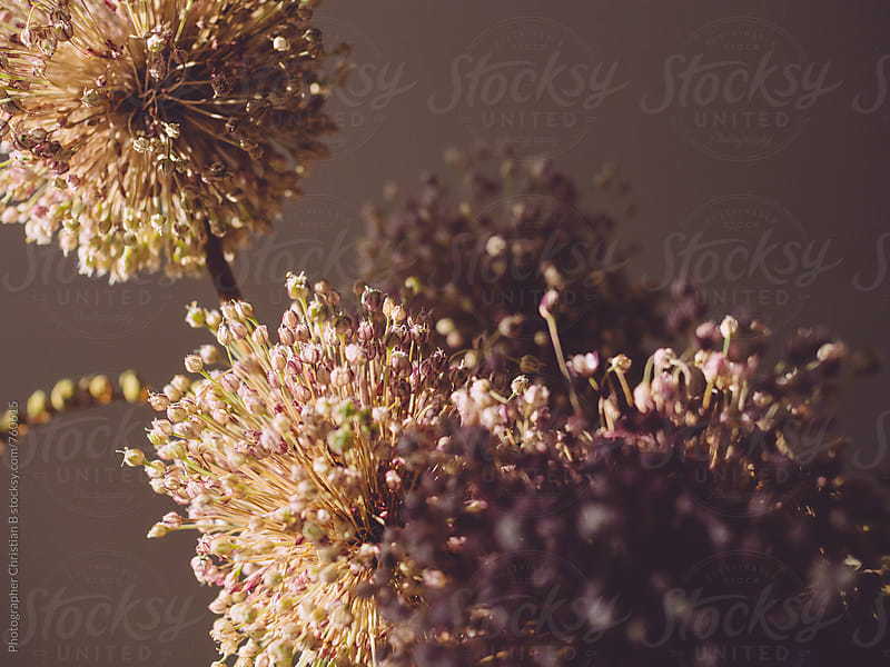 Dry flowers by Photographer Christian B for Stocksy United