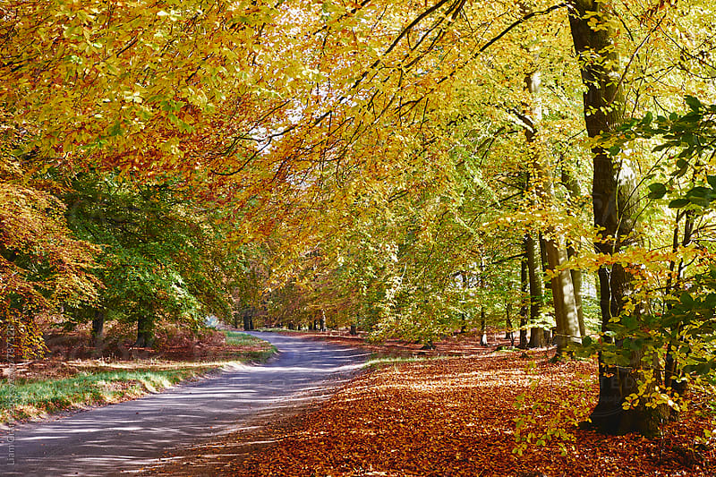 Remote country road through Autumnal woodland. Norfolk, UK. by Liam Grant for Stocksy United