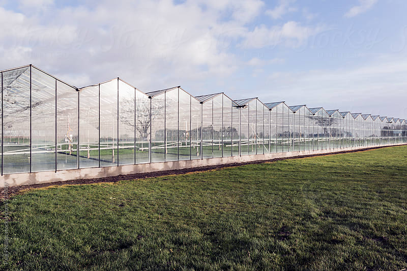 Large industrial greenhouses with plants by Paul Phillips for Stocksy United