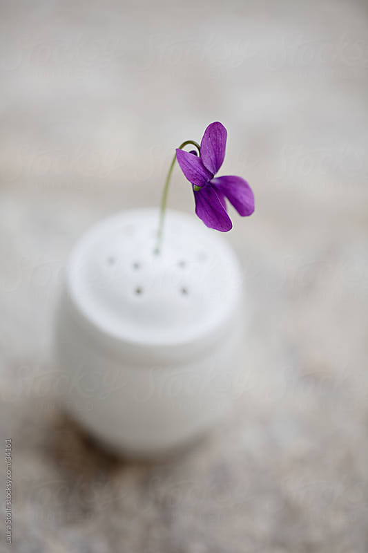 One single english violet in a white porcelain salt shaker by Laura Stolfi for Stocksy United