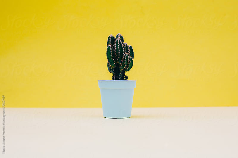 cactus behind yellow wall  by Thais Ramos Varela for Stocksy United