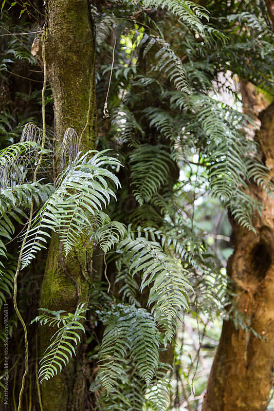 Fern covered tree trunk in New Zealand by Matthew Spaulding for Stocksy United