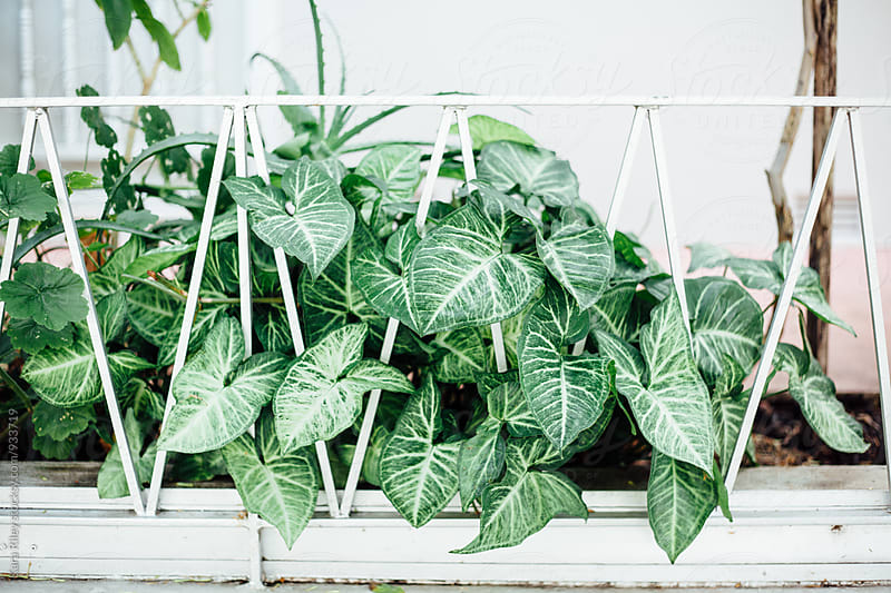 Plants on Balcony by Kara Riley for Stocksy United