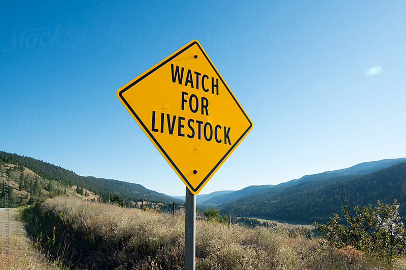 Watch For Livestock by Ronnie Comeau for Stocksy United