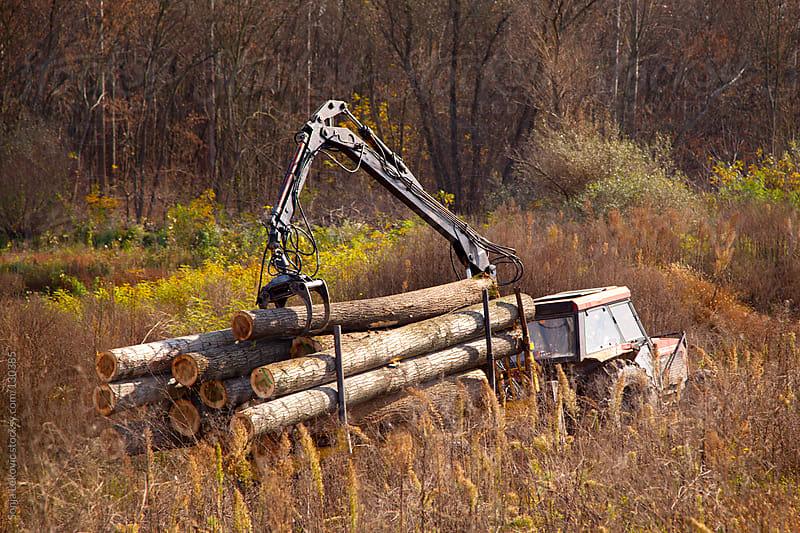 timber by Sonja Lekovic for Stocksy United