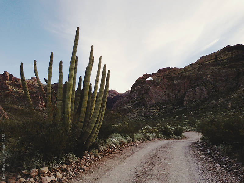 Rock Arch Cactus Road by Kevin Russ for Stocksy United