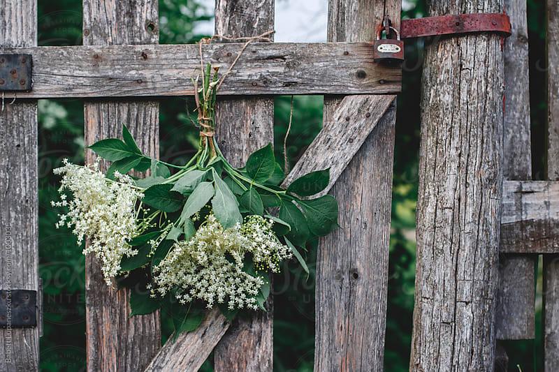 Elderflower bunch by Babett Lupaneszku for Stocksy United