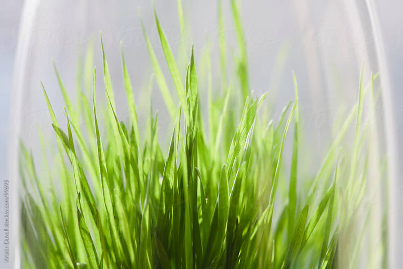 Grass growing under glass by Kristin Duvall for Stocksy United