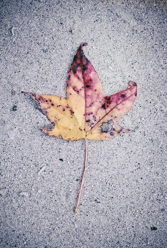 One of the last leaves from fall laying in the sand by Carolyn Lagattuta for Stocksy United