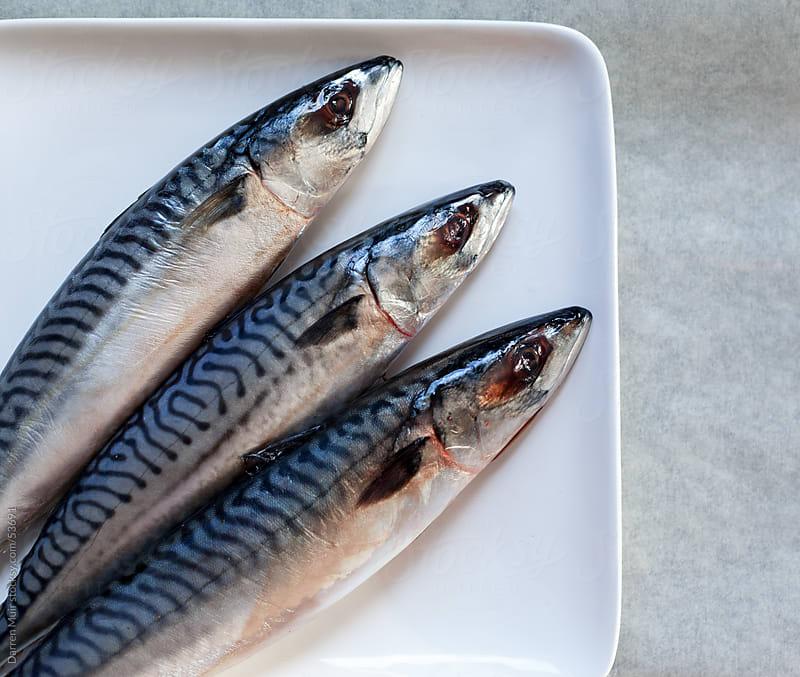 Three line caught mackerel fish by Darren Muir for Stocksy United