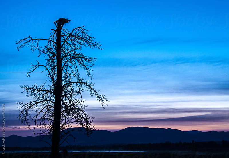 Eagle's Nest at Dawn by Rhonda Adkins for Stocksy United