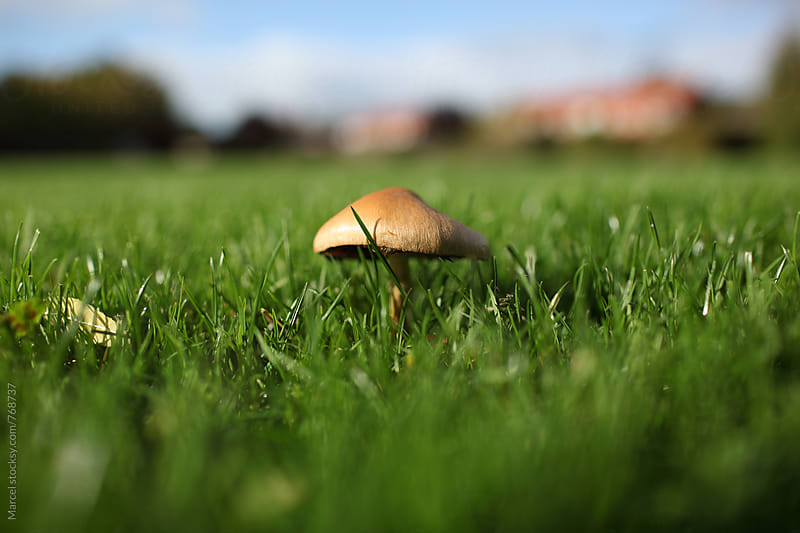 Mushroom popping up on an urban soccer field by Marcel for Stocksy United