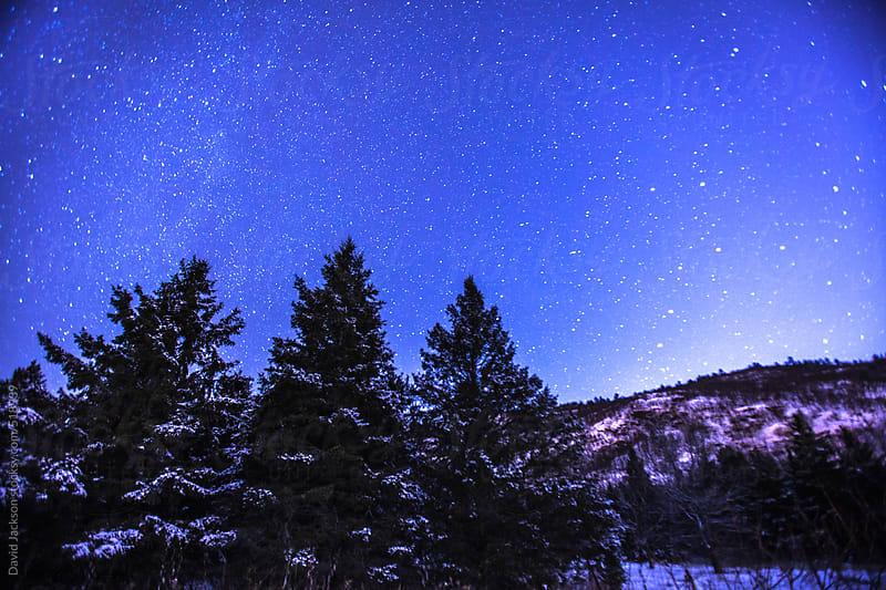 Starry Night by David Jackson for Stocksy United