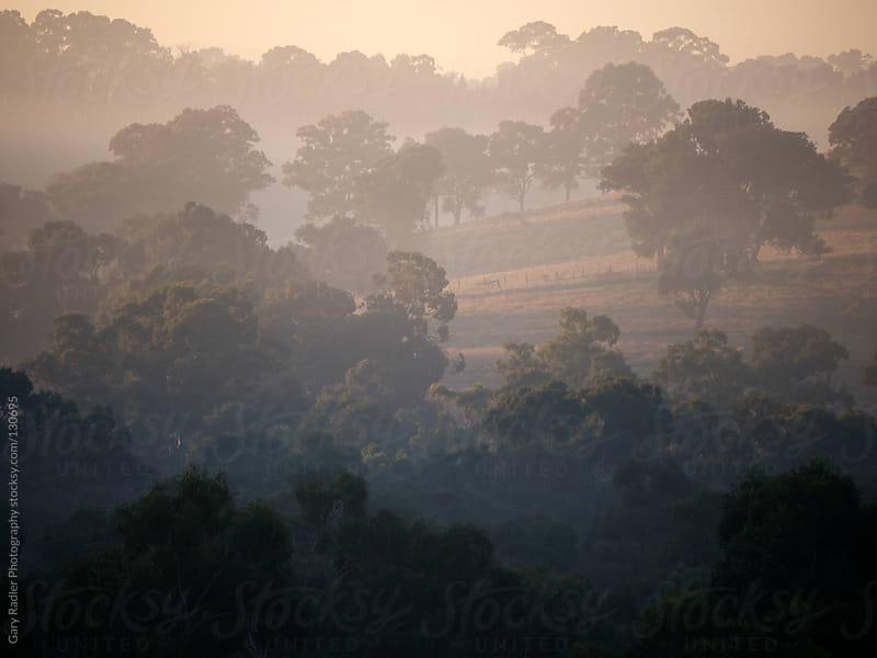 Morning Fog an Australian Farm by Gary Radler Photography for Stocksy United